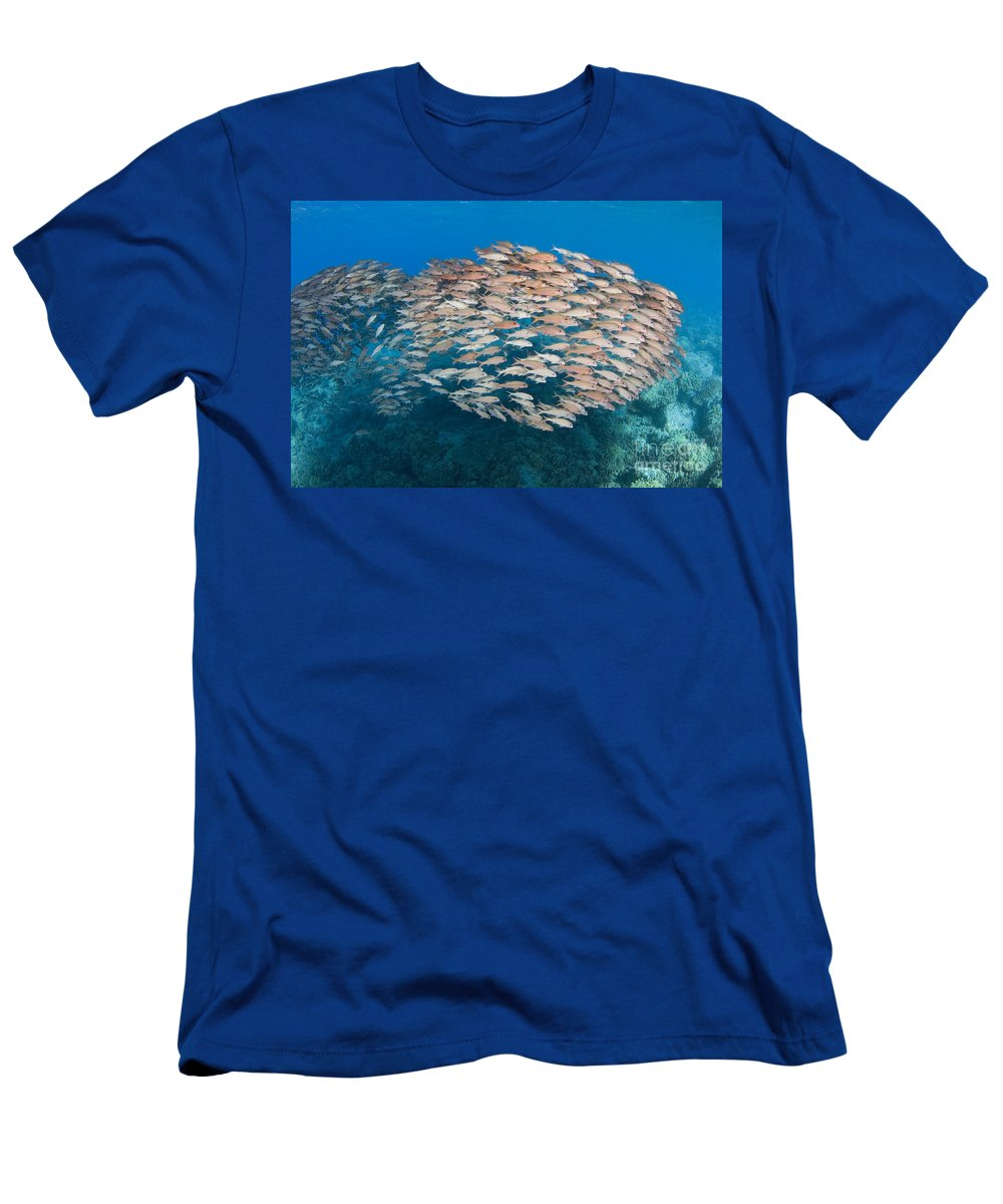 Animal Art Men's T-Shirt (Athletic Fit) featuring the photograph Yellowfin Goatfish by Dave Fleetham - Printscapes