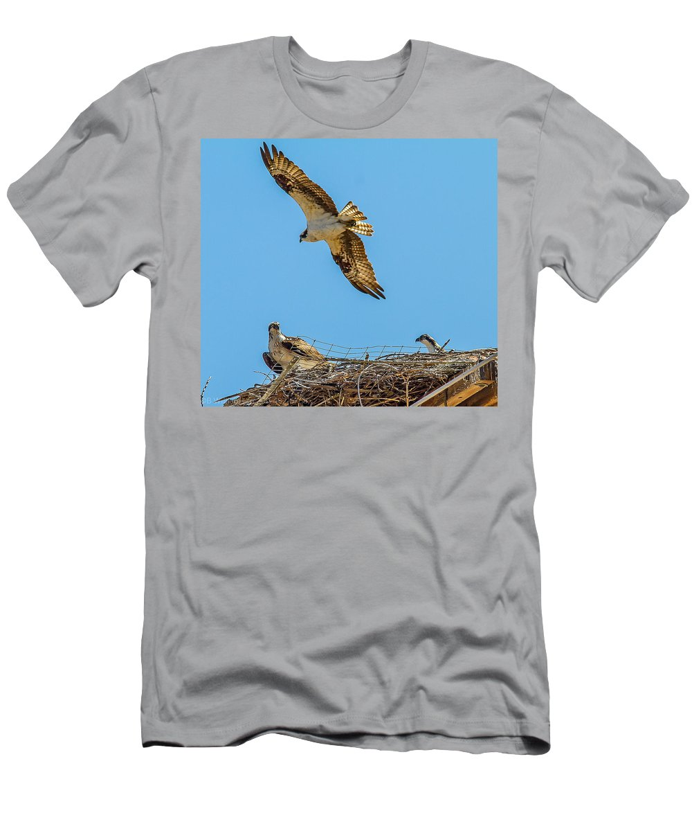 3 Ospreys Men's T-Shirt (Athletic Fit) featuring the photograph 3 Ospreys At The Nest by Brian Williamson