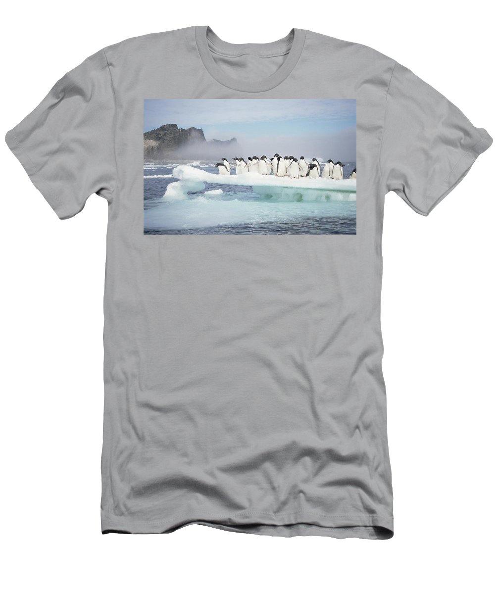 Feb0514 Men's T-Shirt (Athletic Fit) featuring the photograph Adelie Penguins On Melting Ice Floe by Tui De Roy
