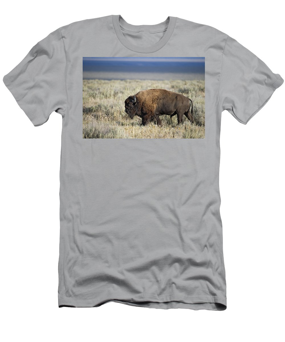 American Men's T-Shirt (Athletic Fit) featuring the photograph American Bison by Gary Langley