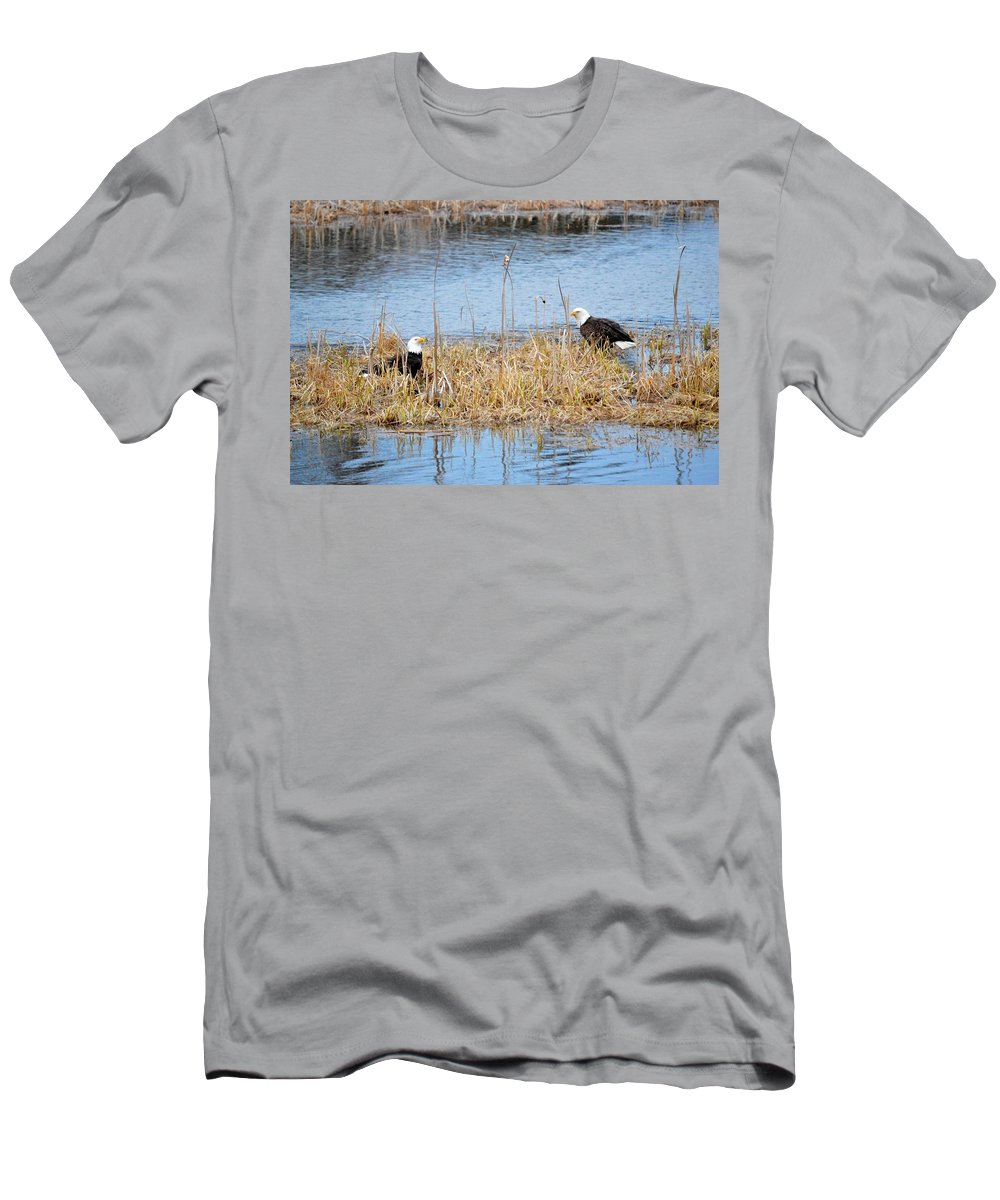 Bald Eagle Men's T-Shirt (Athletic Fit) featuring the photograph Bald Eagle Pair by Thomas Phillips