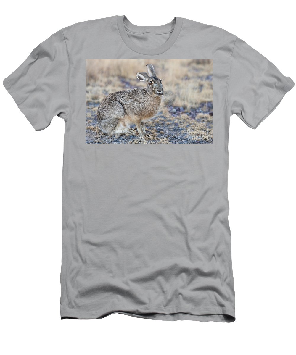 Lepus Californicus Men's T-Shirt (Athletic Fit) featuring the photograph Black-tailed Jackrabbit by John Shaw