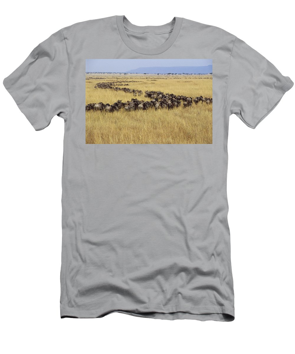 Feb0514 Men's T-Shirt (Athletic Fit) featuring the photograph Blue Wildebeest Migrating Masai Mara by Gerry Ellis