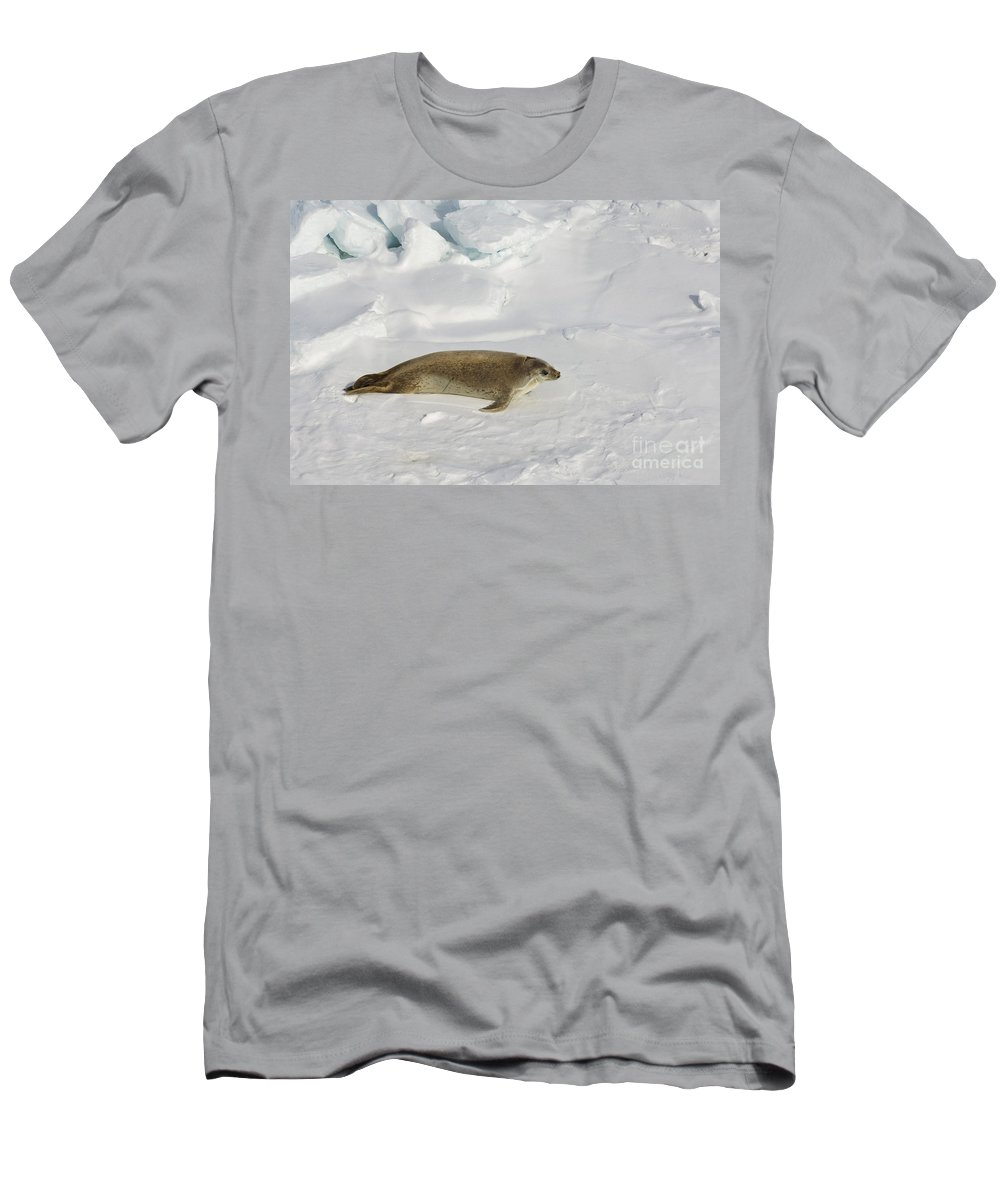 Pack Ice Men's T-Shirt (Athletic Fit) featuring the photograph Crabeater Seal, Antarctica by John Shaw