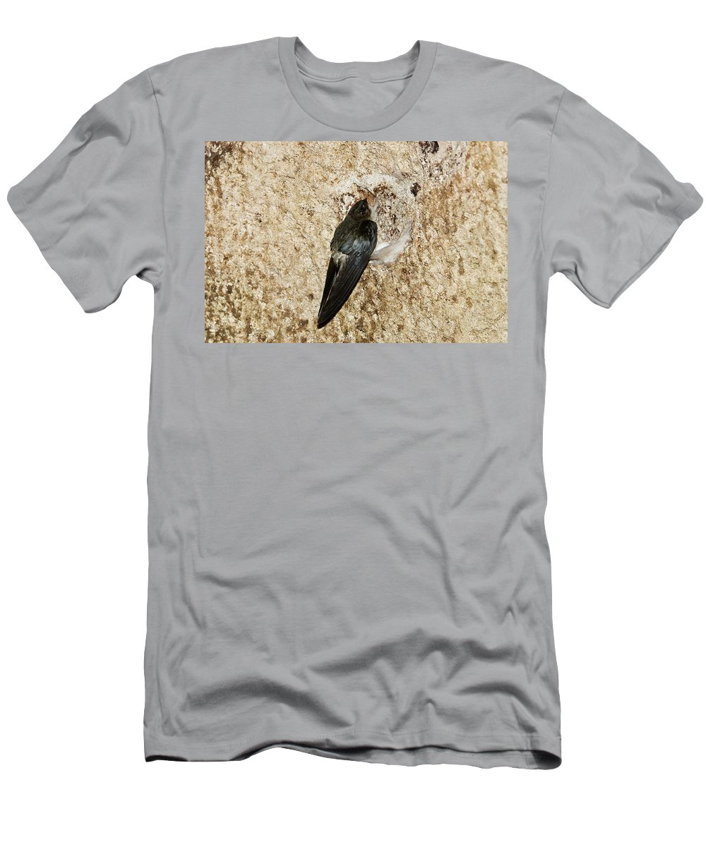 Feb0514 Men's T-Shirt (Athletic Fit) featuring the photograph Edible-nest Swiftlet On Nest by Konrad Wothe
