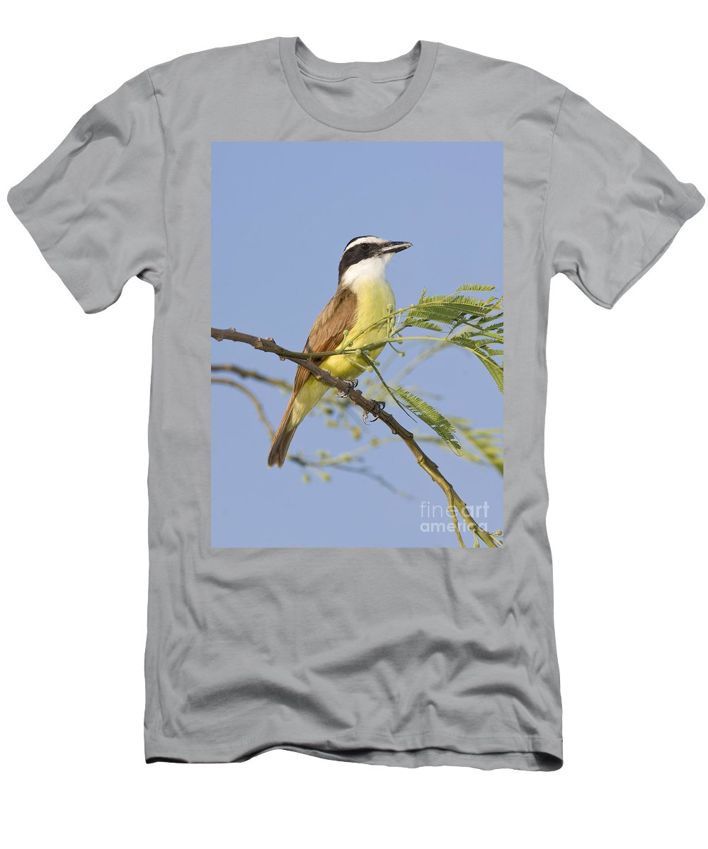 Fauna Men's T-Shirt (Athletic Fit) featuring the photograph Great Kiskadee by Anthony Mercieca