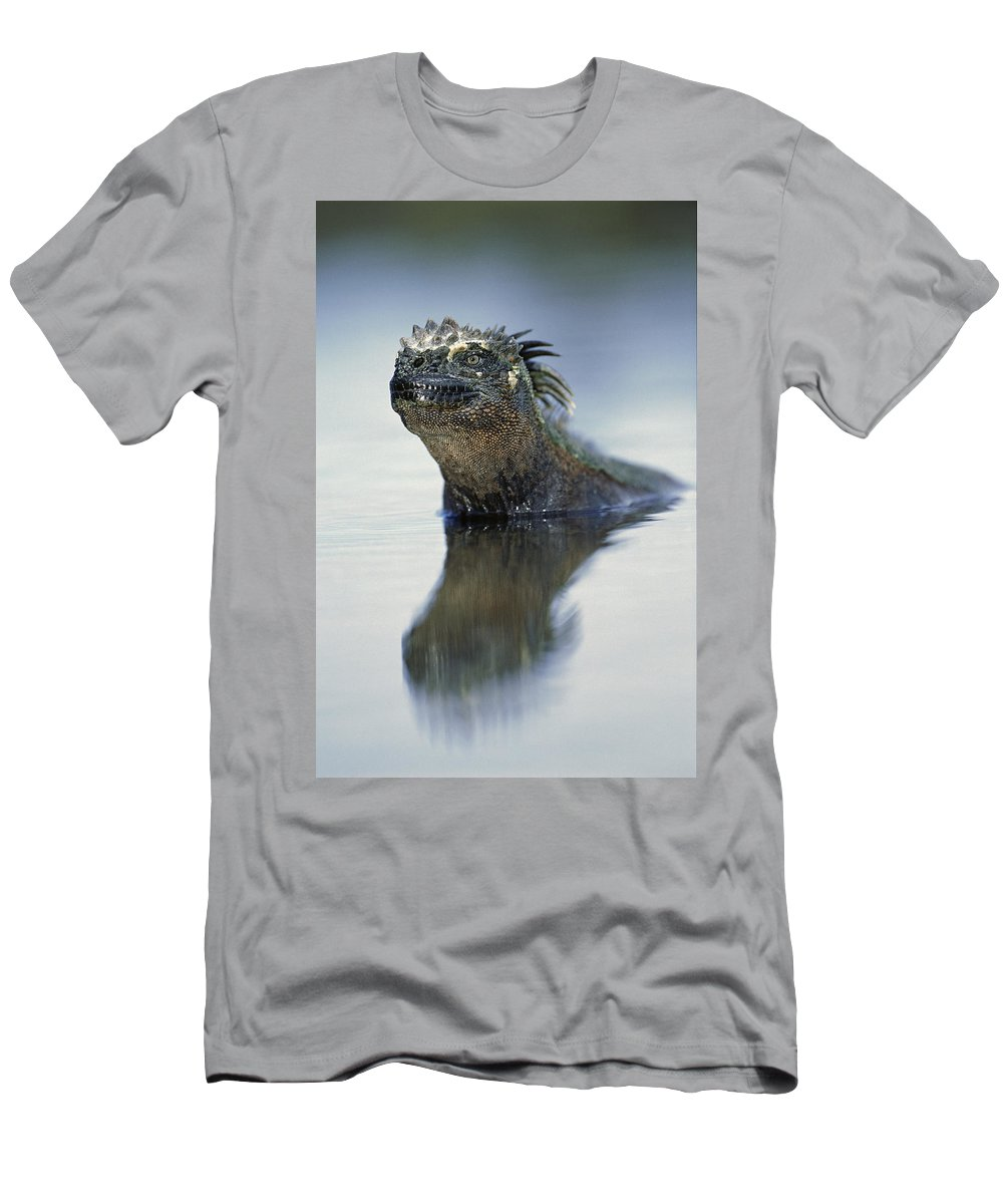 Feb0514 Men's T-Shirt (Athletic Fit) featuring the photograph Marine Iguana Galapagos Islands by Tui De Roy