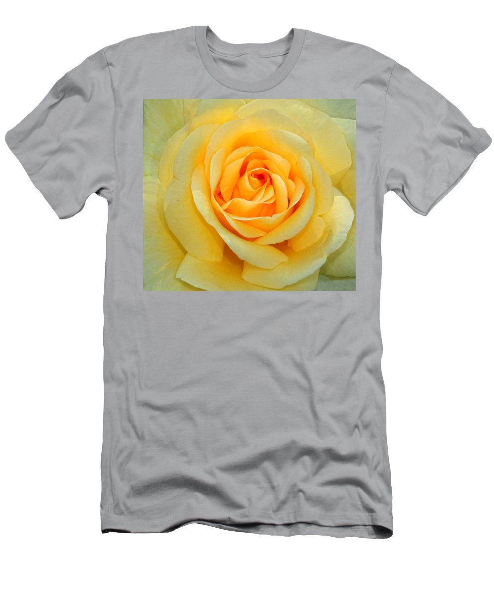 Rose Men's T-Shirt (Athletic Fit) featuring the photograph Orange Glow by Dave Mills