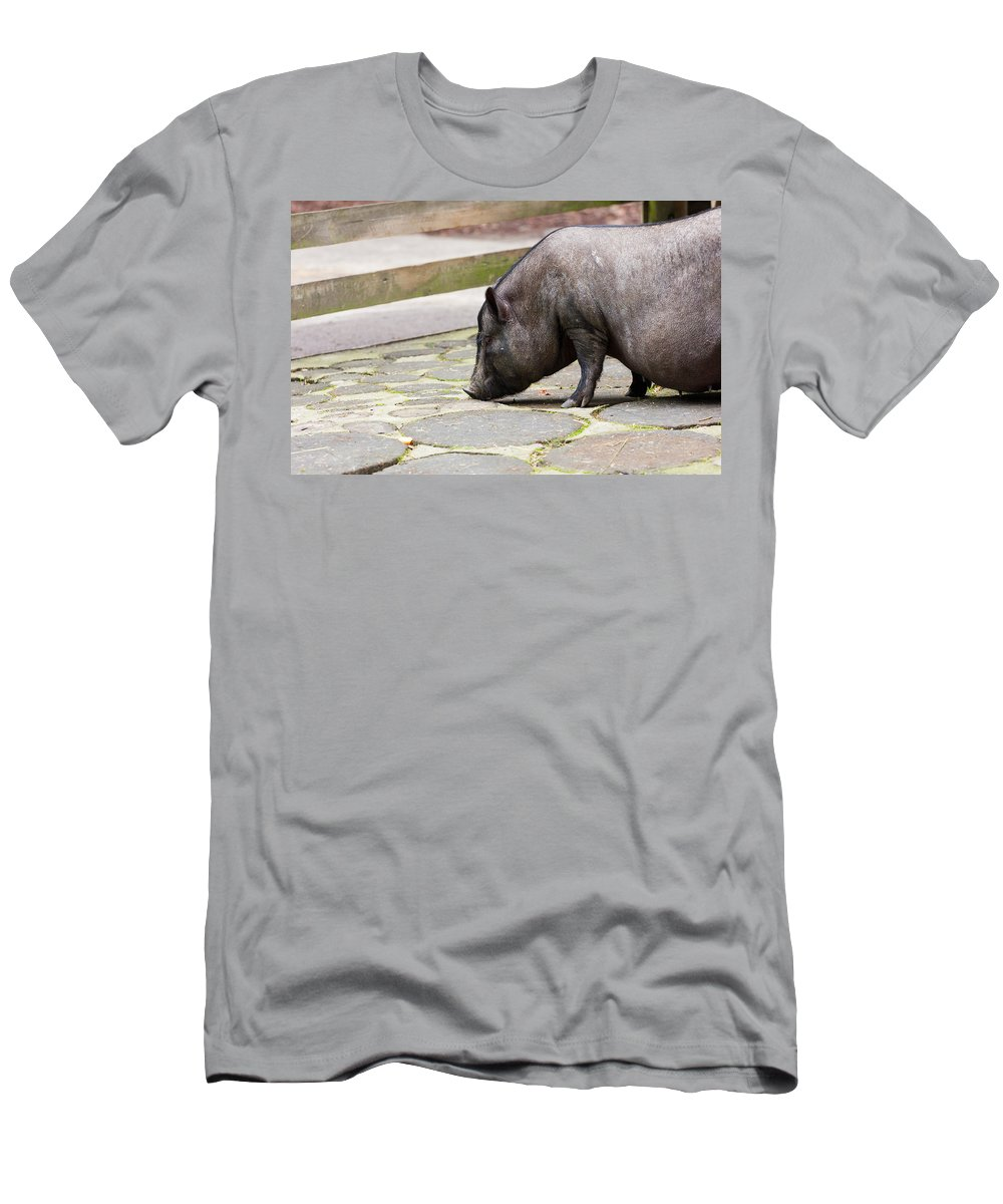 Pig Men's T-Shirt (Athletic Fit) featuring the photograph Potbelly Pig by Pati Photography