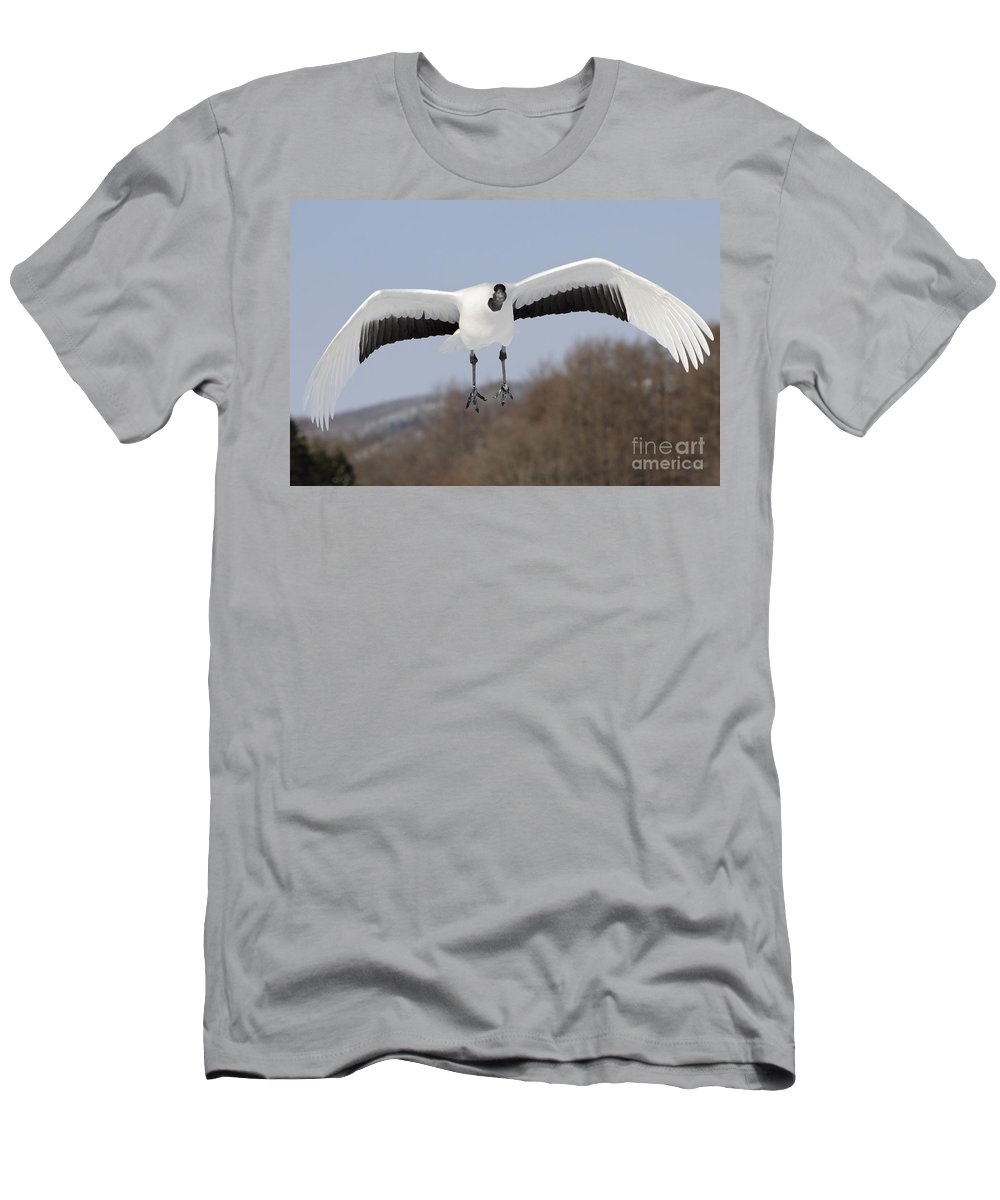 Asia Men's T-Shirt (Athletic Fit) featuring the photograph Red-crowned Crane by John Shaw