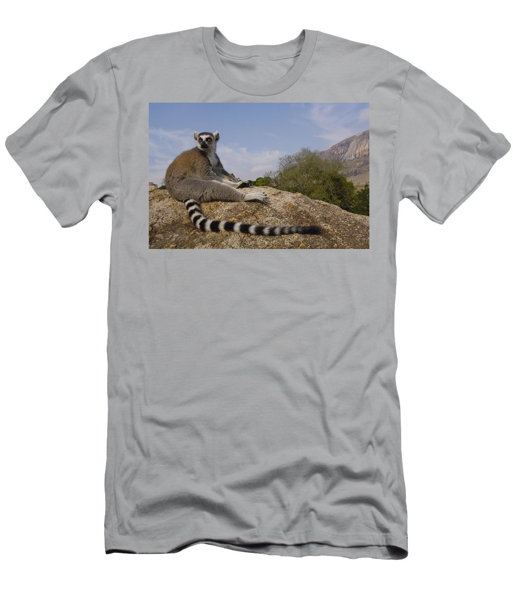 Feb0514 Men's T-Shirt (Athletic Fit) featuring the photograph Ring-tailed Lemur Portrait Madagascar by Pete Oxford