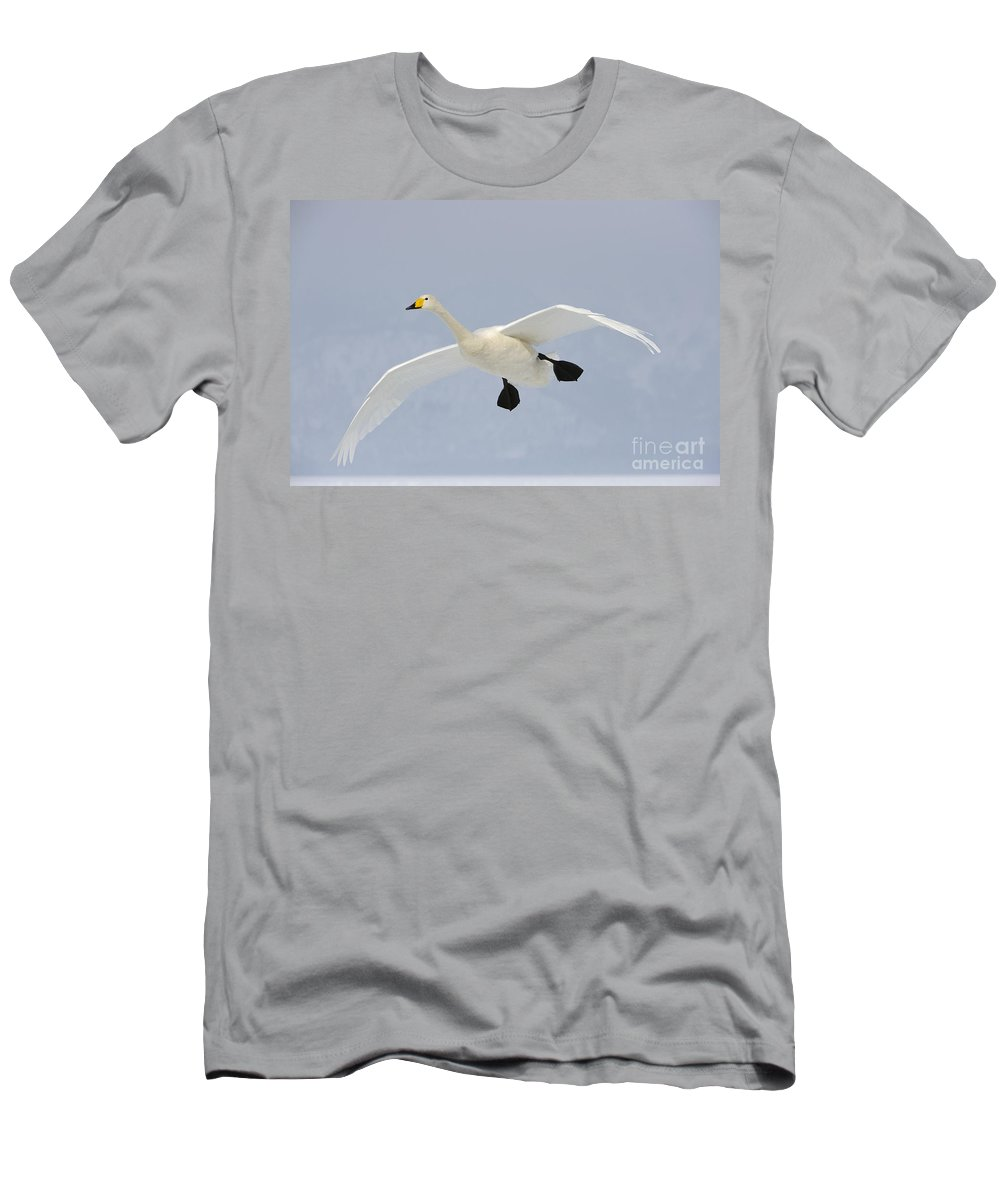 Cygnus Cygnus Men's T-Shirt (Athletic Fit) featuring the photograph Whooper Swan by John Shaw