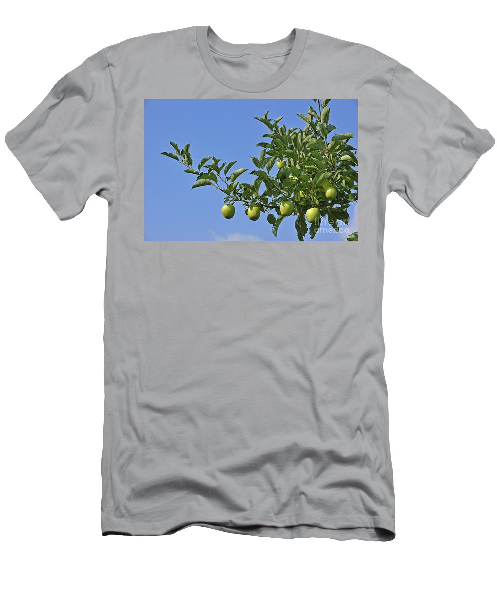 Malus Domestica Men's T-Shirt (Athletic Fit) featuring the photograph 110414p073 by Arterra Picture Library