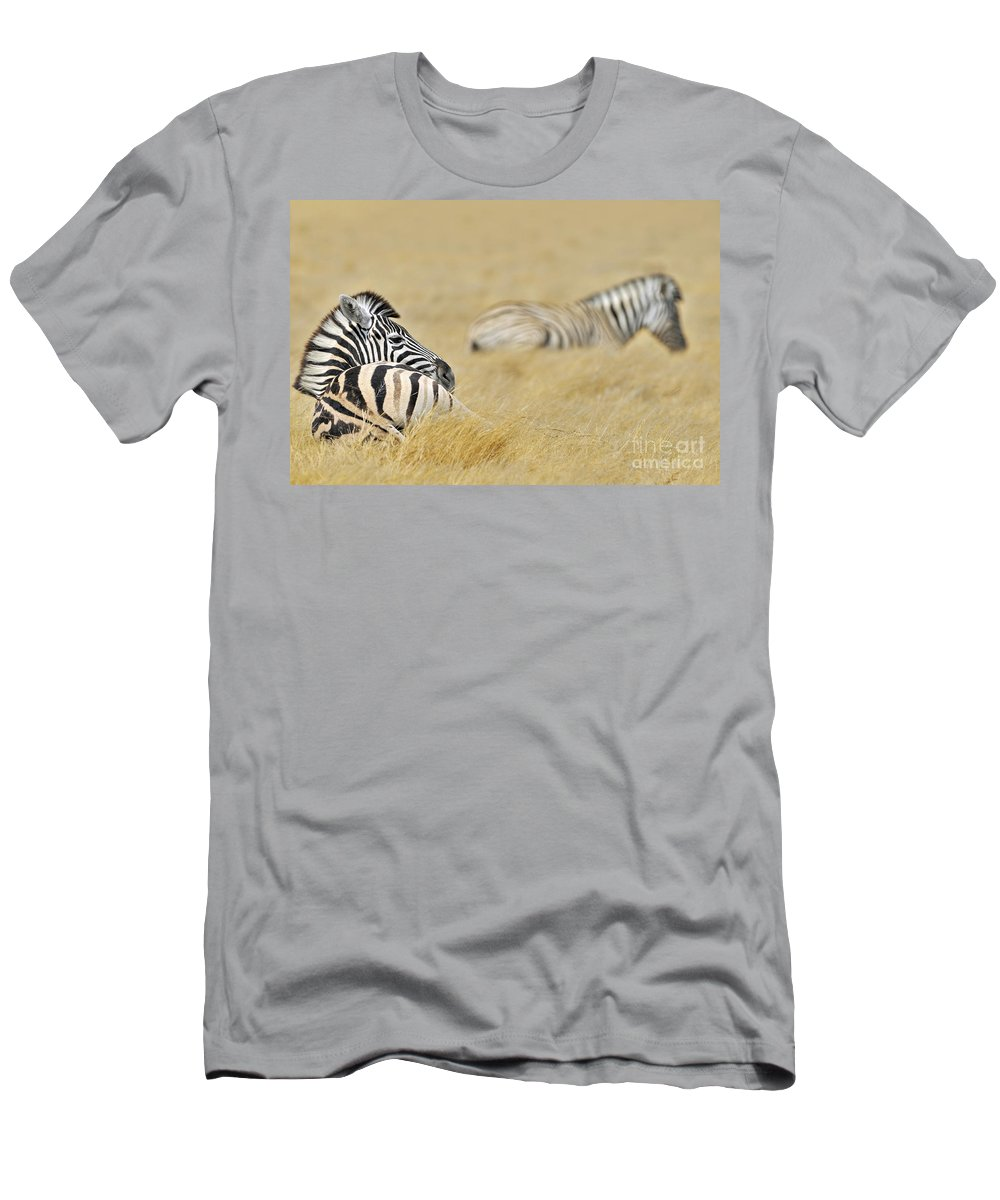 Burchell's Zebra Men's T-Shirt (Athletic Fit) featuring the photograph 120118p096 by Arterra Picture Library