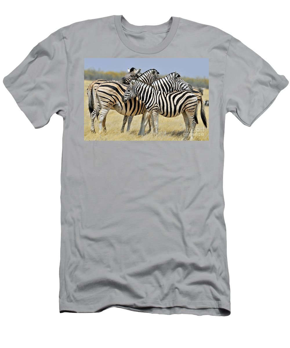 Burchell's Zebra Men's T-Shirt (Athletic Fit) featuring the photograph 120118p097 by Arterra Picture Library