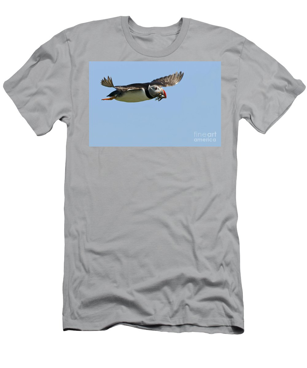 Atlantic Puffin Men's T-Shirt (Athletic Fit) featuring the photograph 120118p289 by Arterra Picture Library