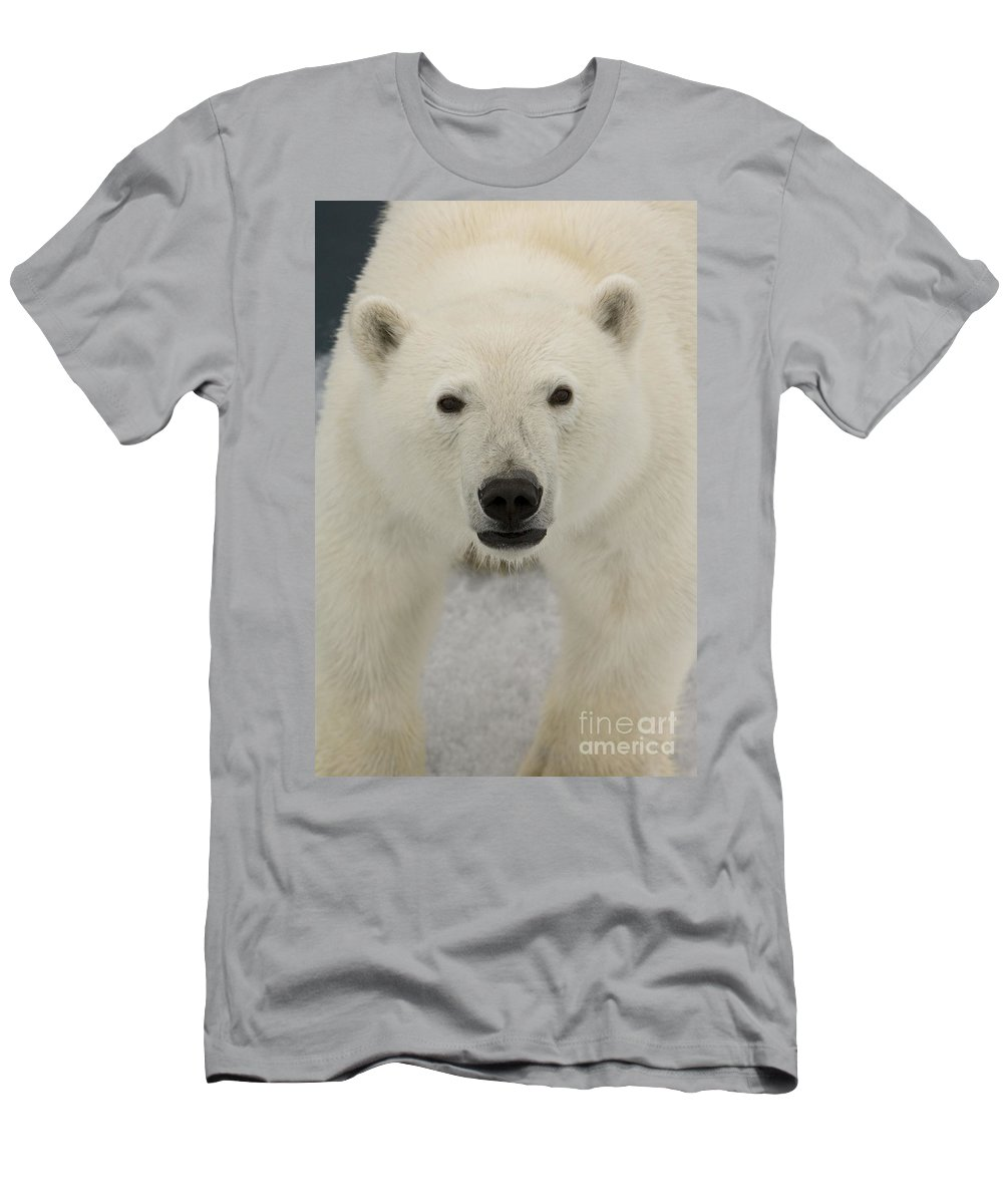 Polar Bear Men's T-Shirt (Athletic Fit) featuring the photograph Polar Bear Walking On Ice by John Shaw