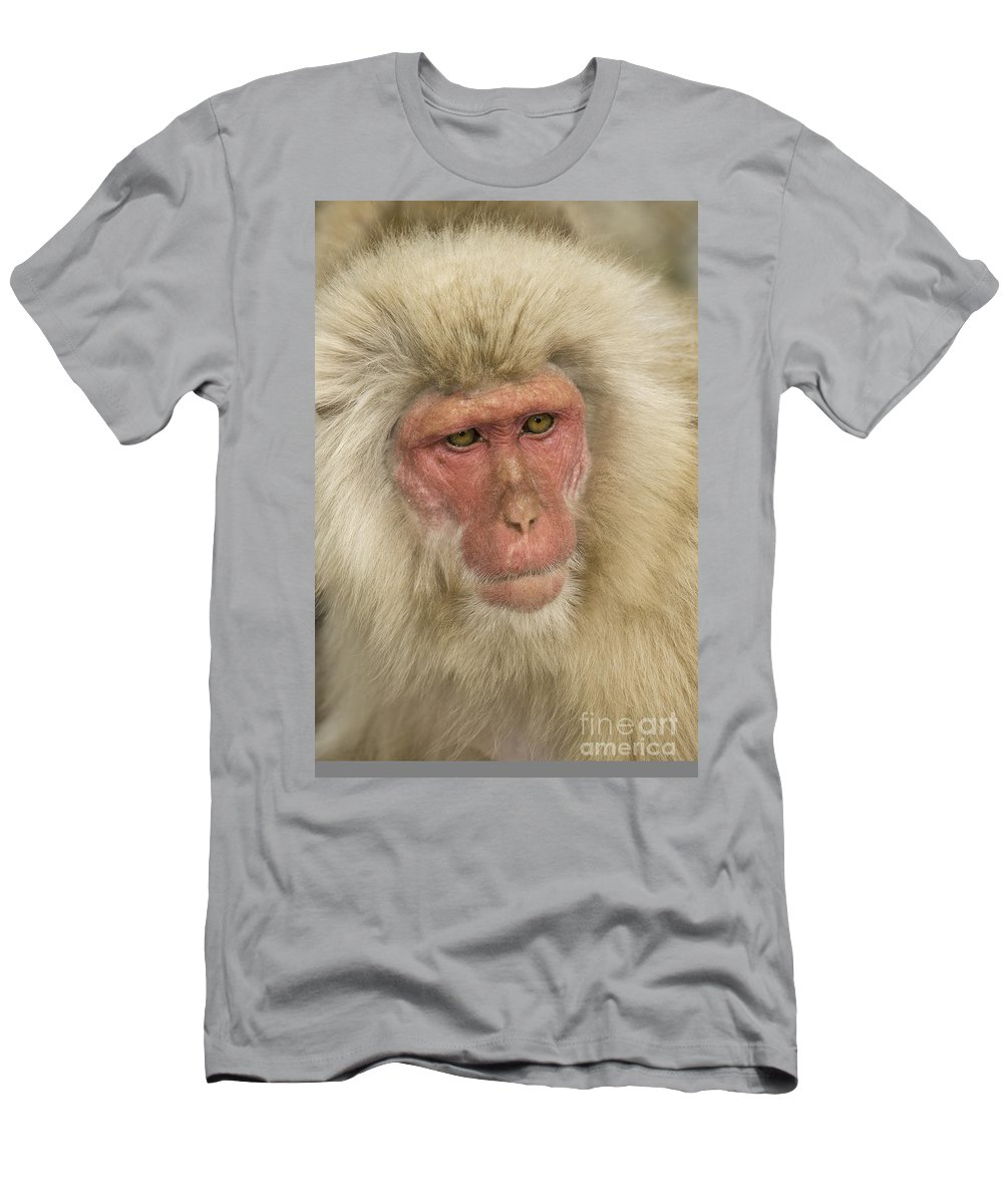 Asia Men's T-Shirt (Athletic Fit) featuring the photograph Snow Monkey, Japan by John Shaw