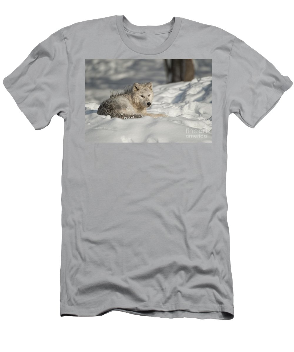Arctic Wolf Photography Men's T-Shirt (Athletic Fit) featuring the photograph Arctic Wolf Pup by Wolves Only