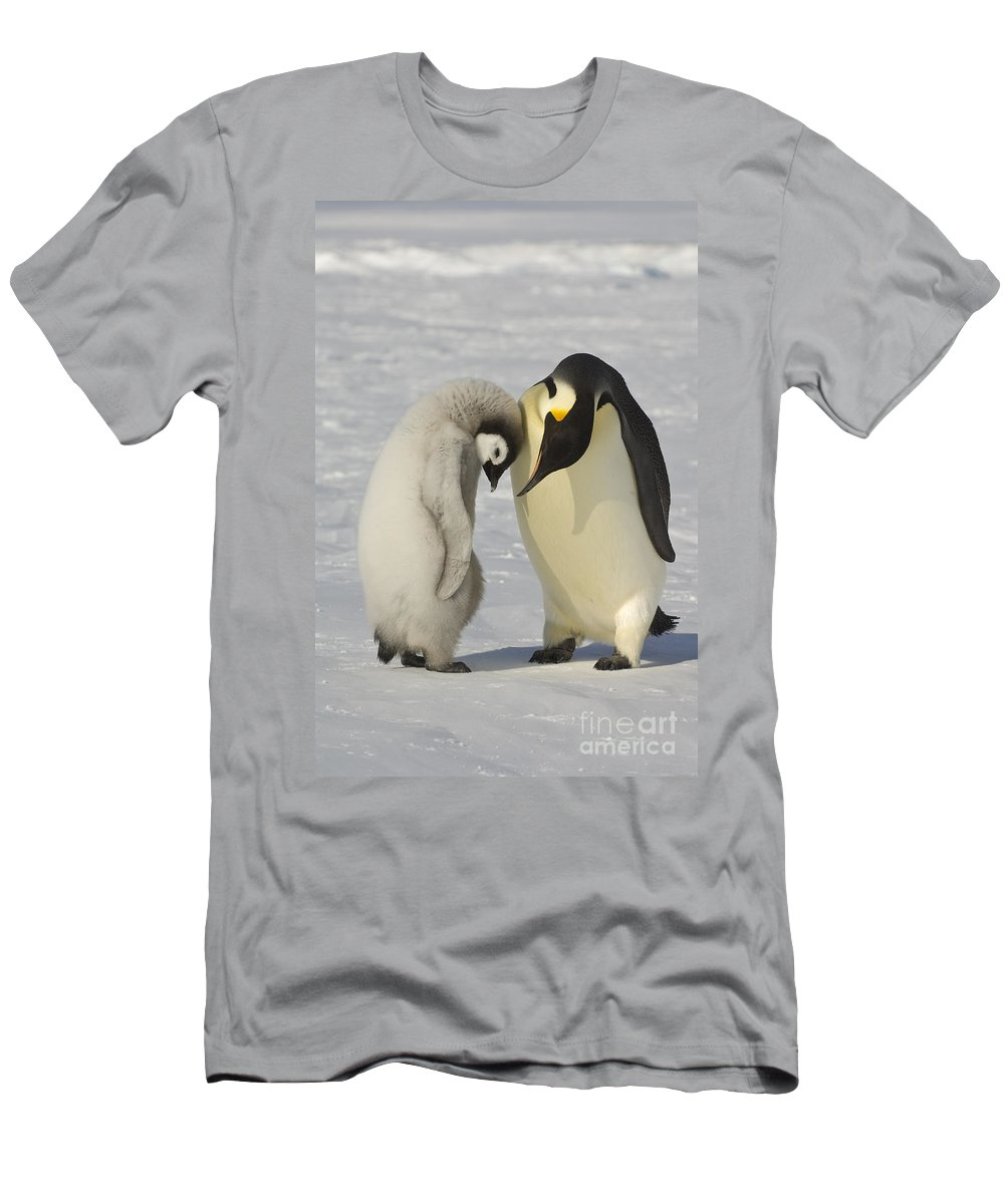 Emperor Penguin Men's T-Shirt (Athletic Fit) featuring the photograph Emperor Penguins by John Shaw