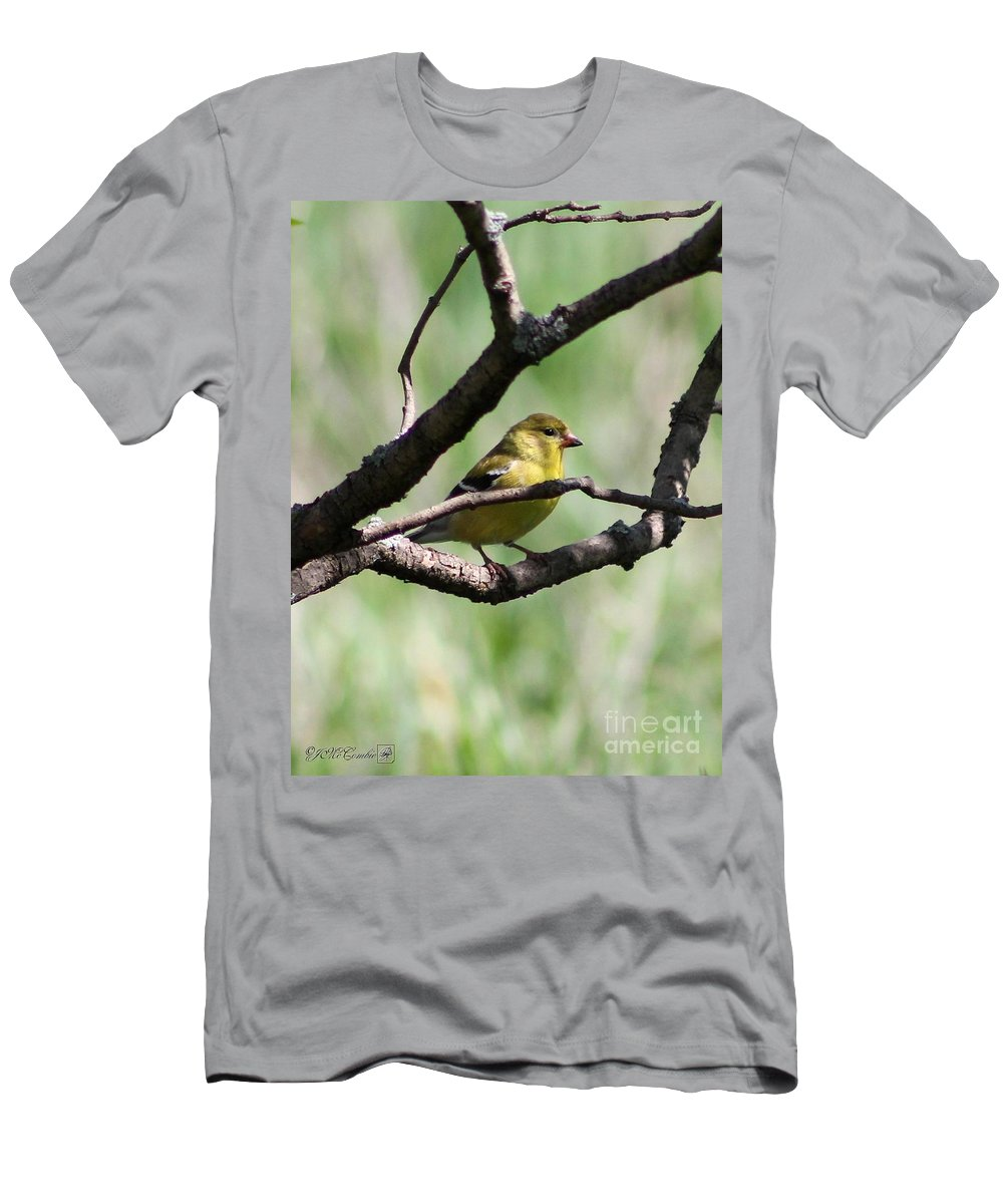 American Goldfinch Men's T-Shirt (Athletic Fit) featuring the photograph Female American Goldfinch by J McCombie