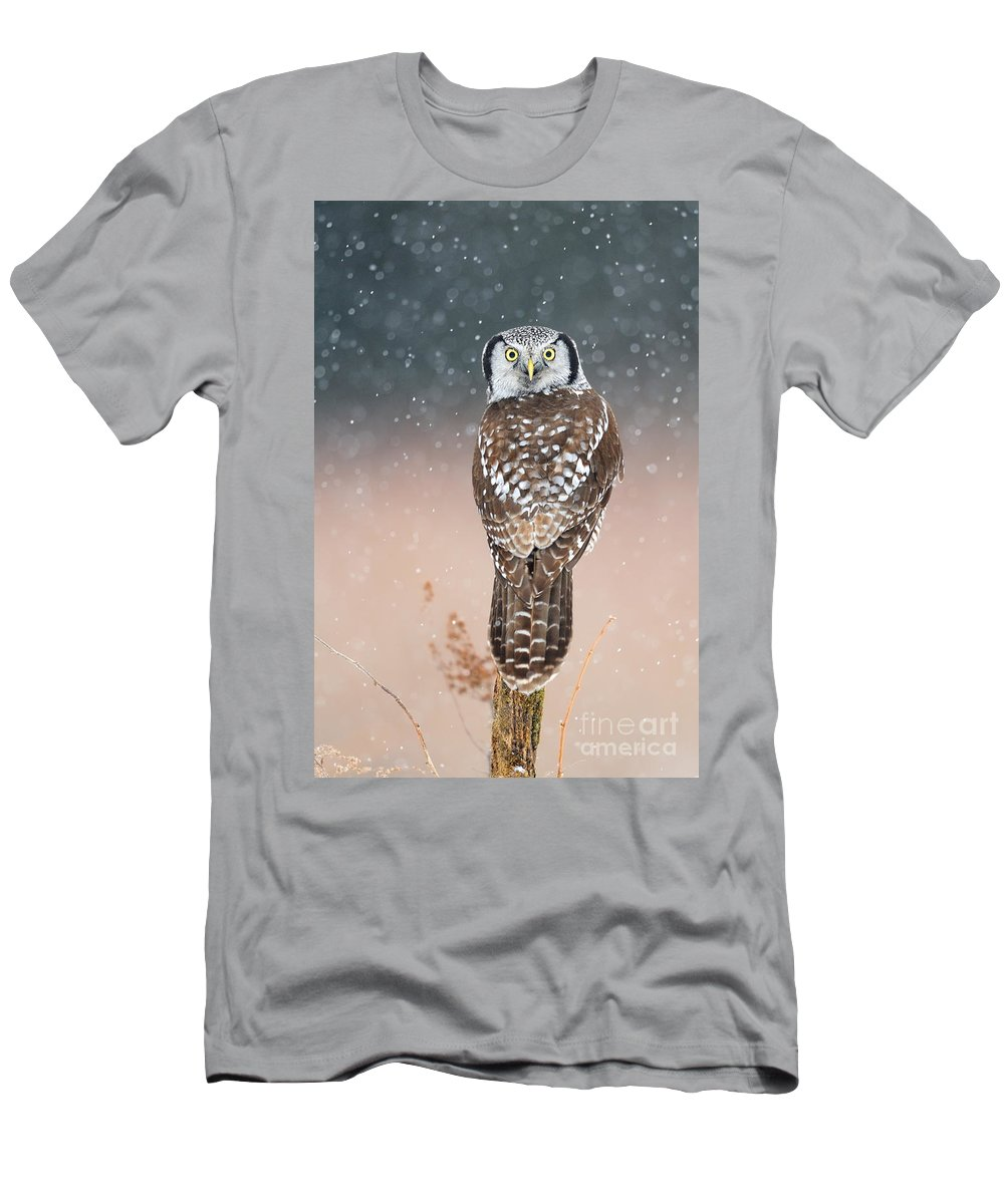 Bird Men's T-Shirt (Athletic Fit) featuring the photograph Northern Hawk Owl by Scott Linstead
