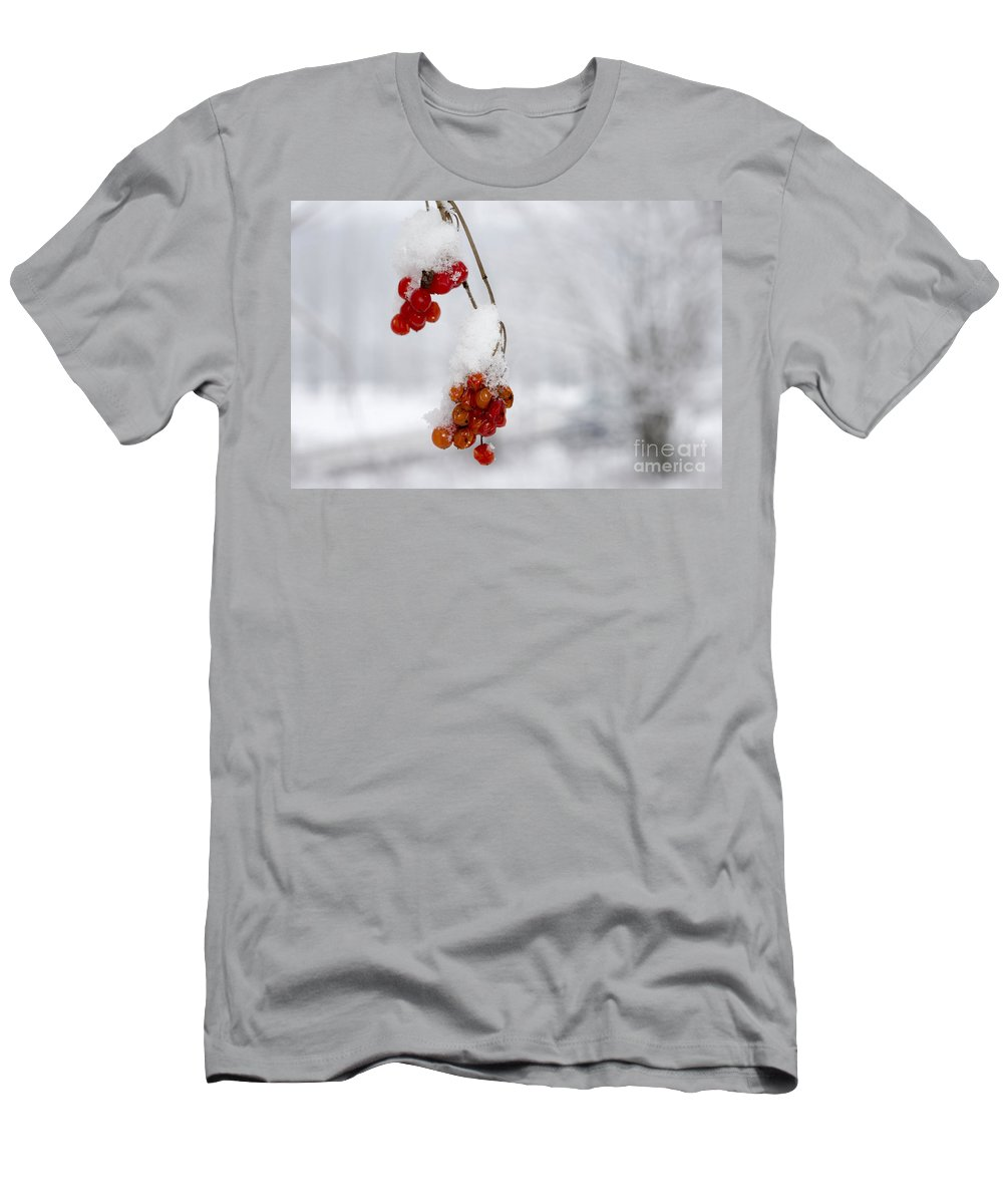 Fruit Men's T-Shirt (Athletic Fit) featuring the photograph Red Fruit With Snow by Mats Silvan