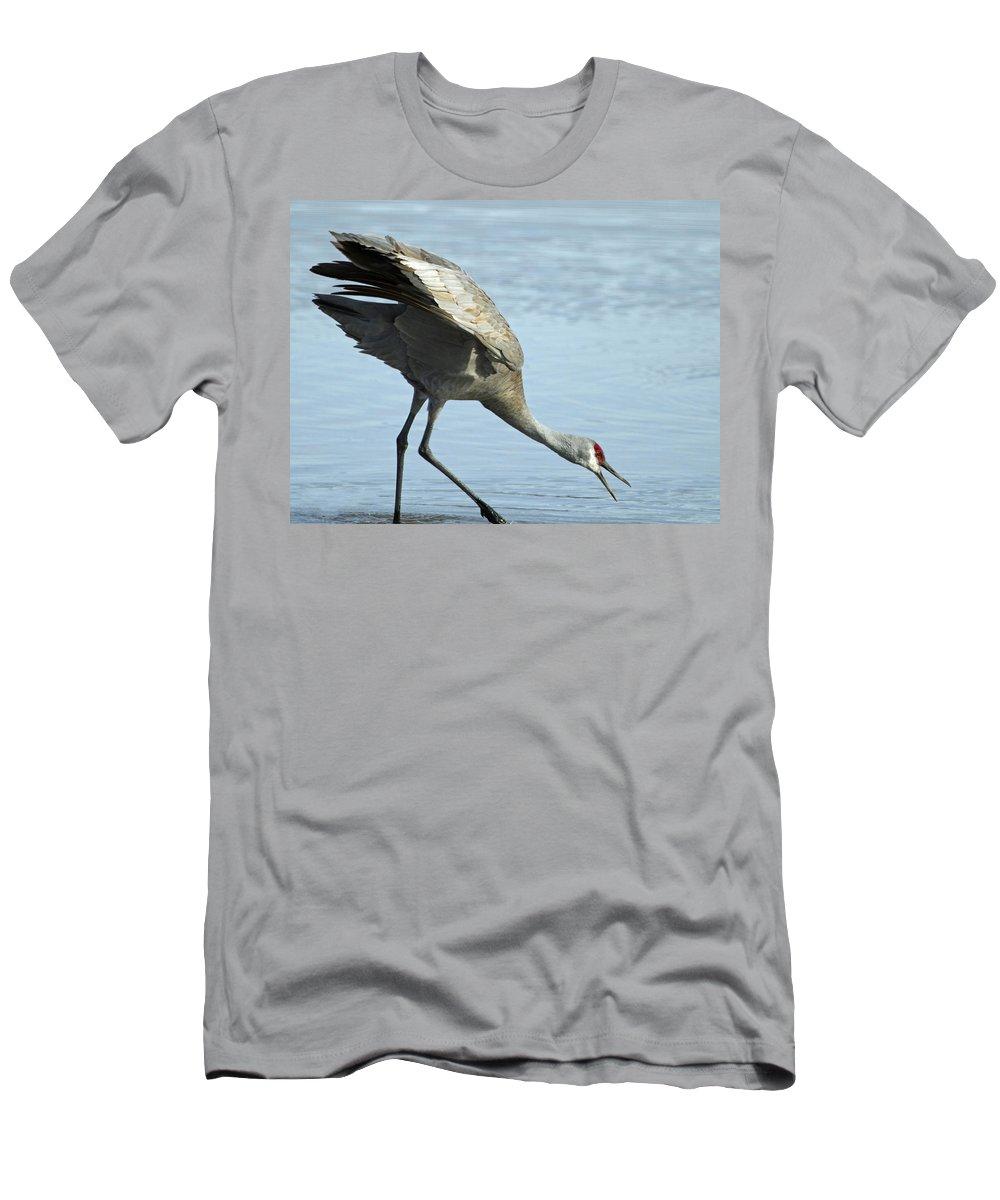 Sandhill Men's T-Shirt (Athletic Fit) featuring the photograph Sandhill Crane by Dee Carpenter