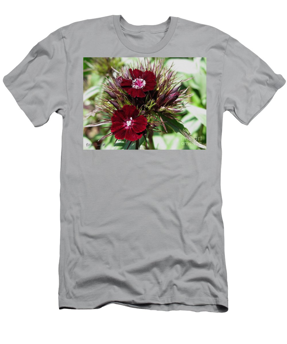 Mccombie Men's T-Shirt (Athletic Fit) featuring the painting Sweet William Named Sooty by J McCombie