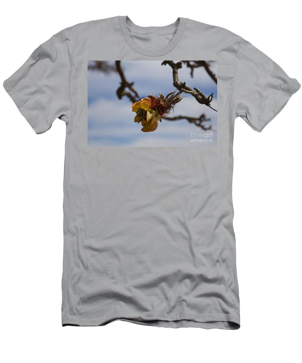 Aloha Men's T-Shirt (Athletic Fit) featuring the photograph Wiliwili Flowers - Erythrina Sandwicensis - Kahikinui Maui Hawaii by Sharon Mau