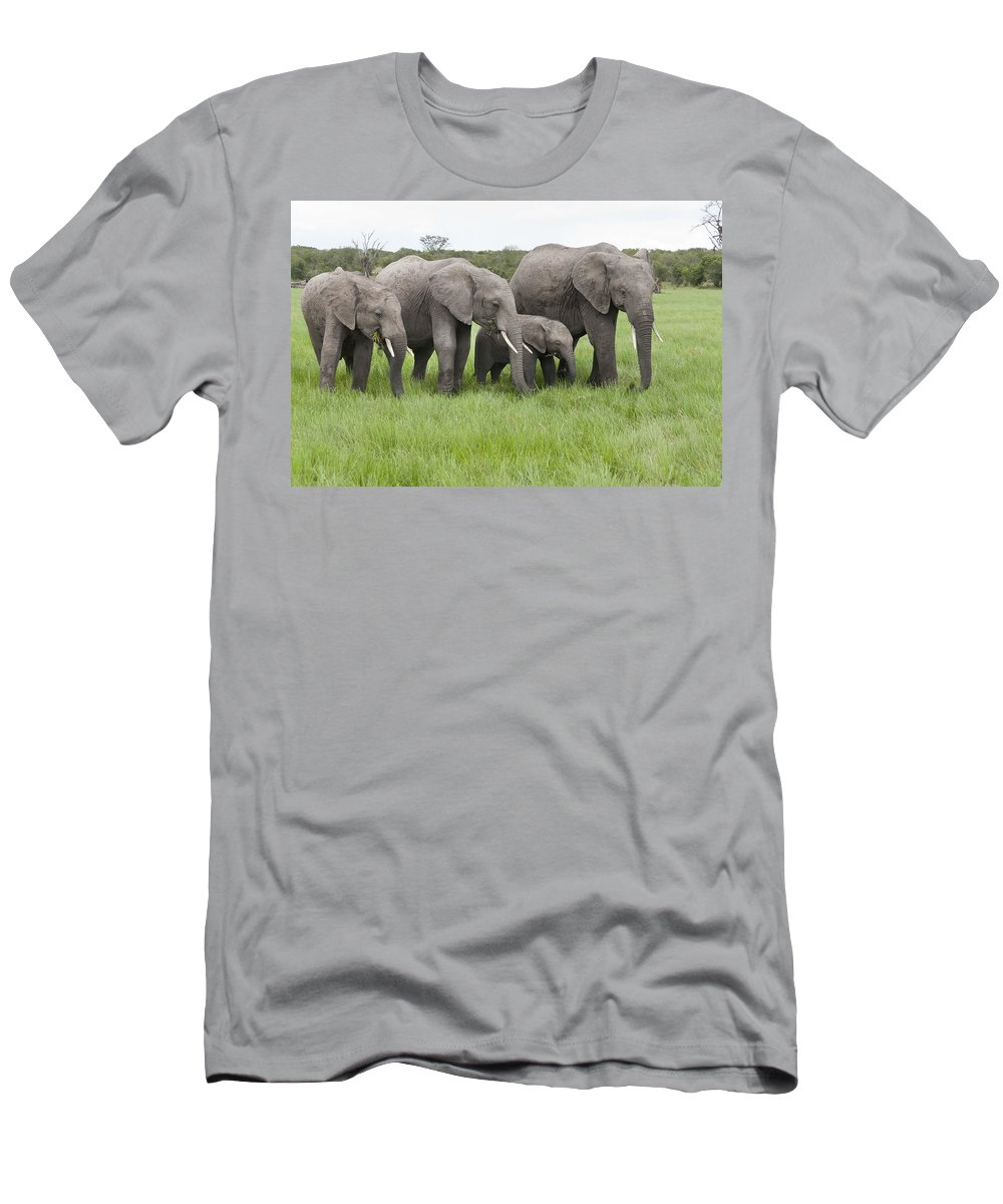 Feb0514 Men's T-Shirt (Athletic Fit) featuring the photograph African Elephants Grazing Kenya by Tui De Roy
