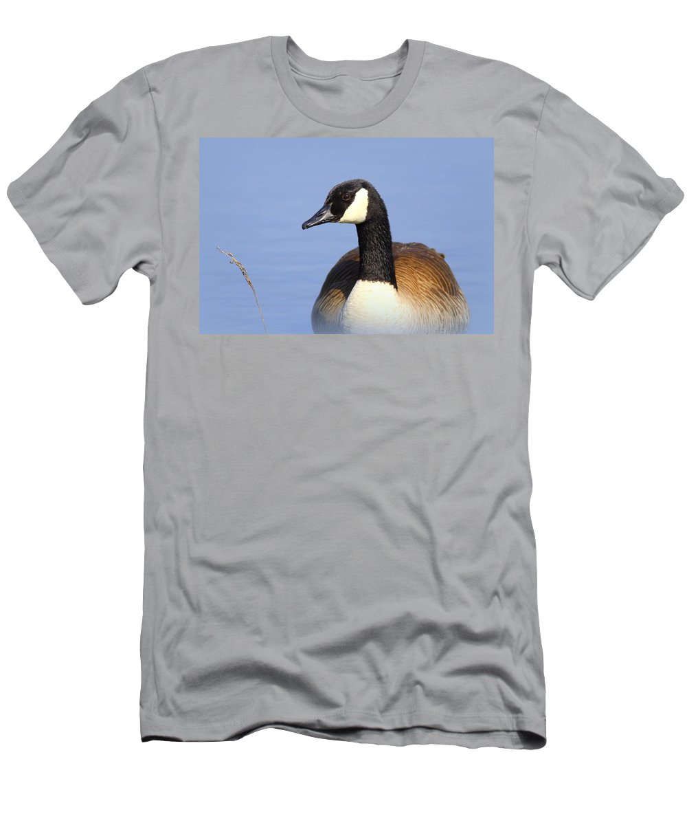Water Men's T-Shirt (Athletic Fit) featuring the photograph Canada Goose by Travis Truelove