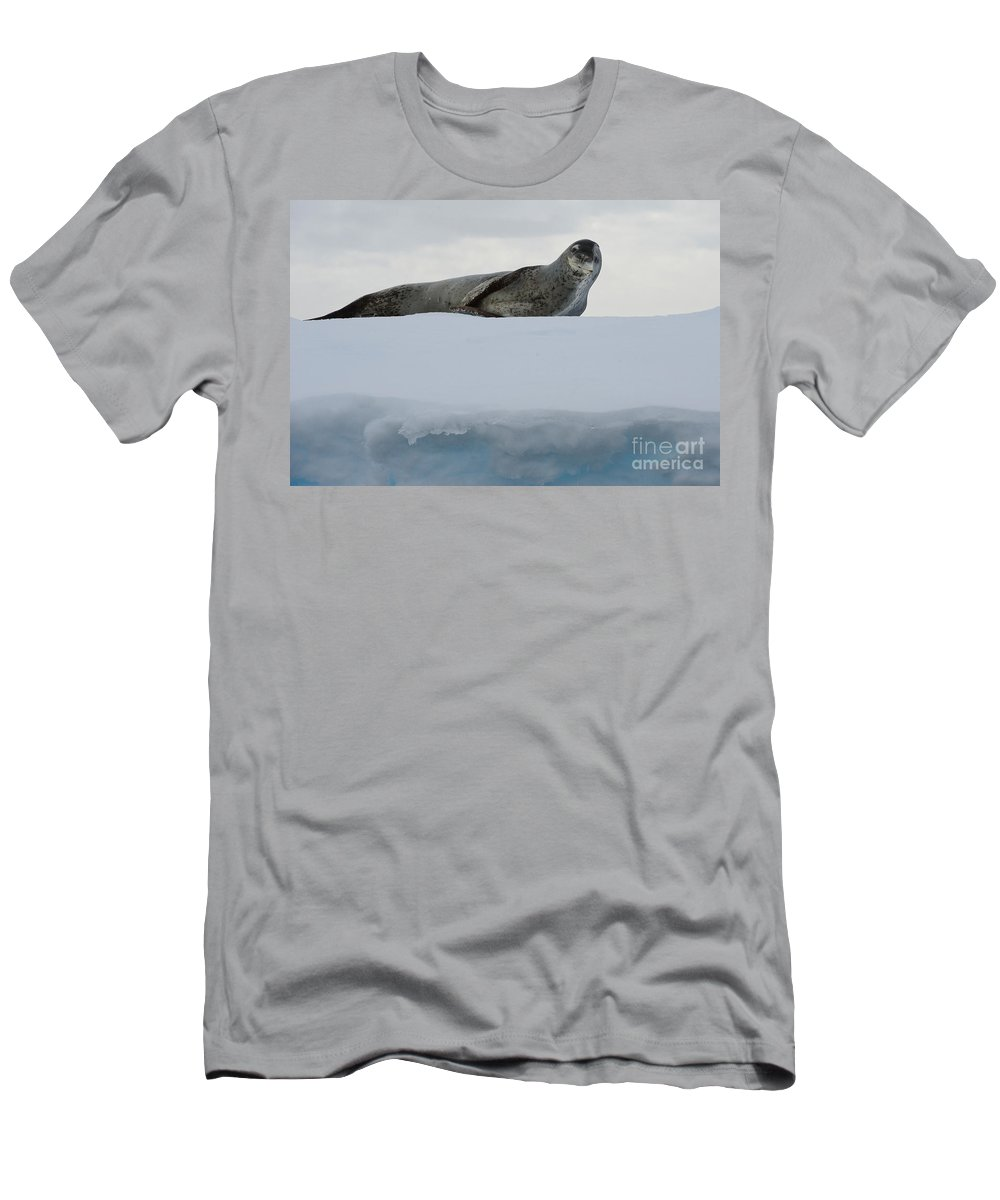 Nature Men's T-Shirt (Athletic Fit) featuring the photograph Leopard Seal by John Shaw