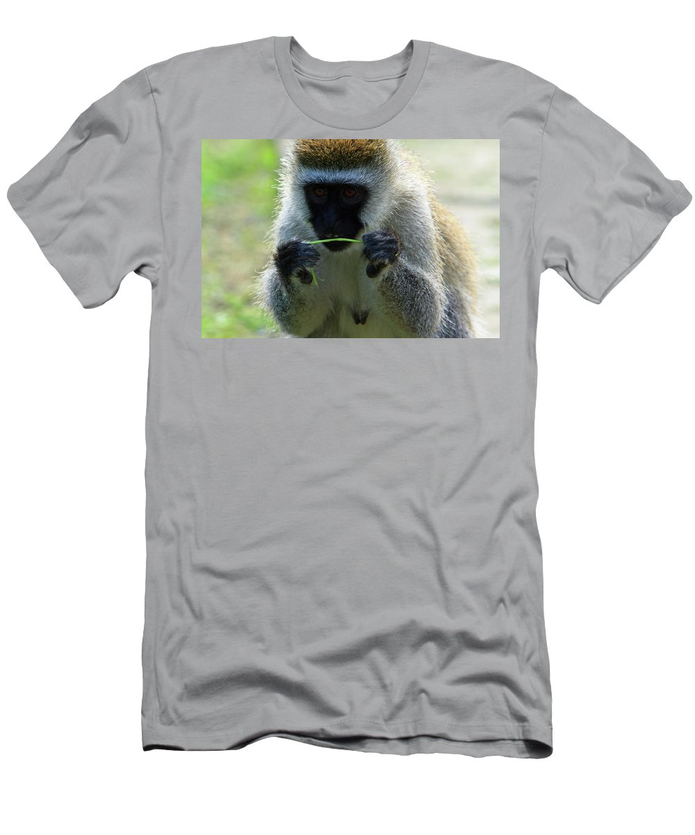 Africa Men's T-Shirt (Athletic Fit) featuring the photograph Vervet Monkey by Aidan Moran