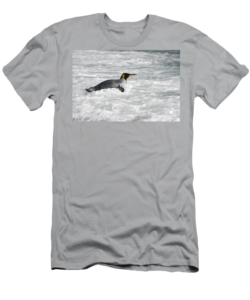 Animal Men's T-Shirt (Athletic Fit) featuring the photograph King Penguin by John Shaw