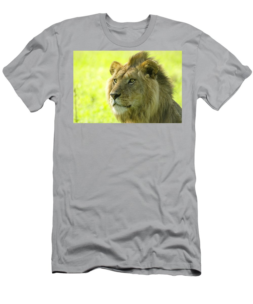 Lion Men's T-Shirt (Athletic Fit) featuring the photograph Golden Boy by Michele Burgess