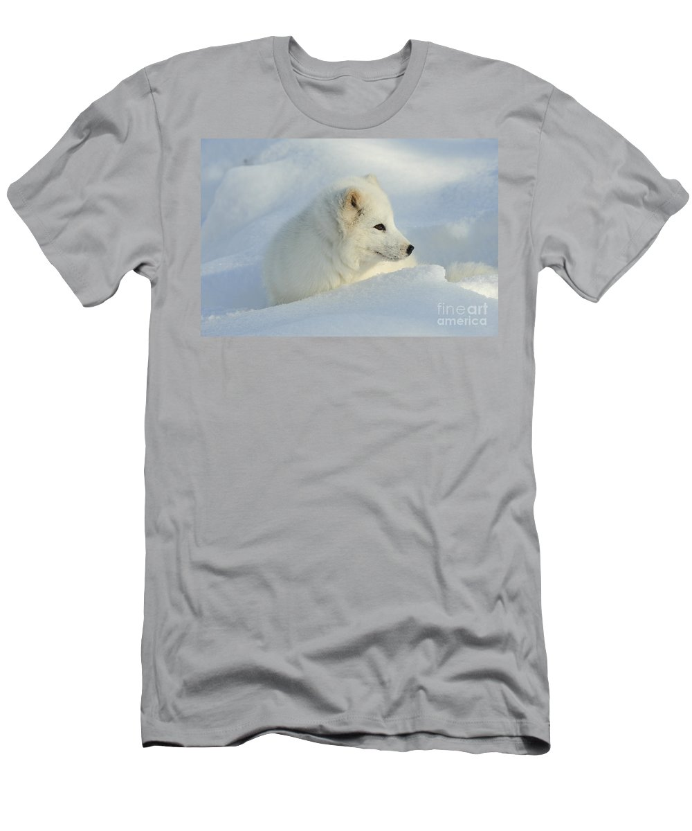 Alopex Lagopus Men's T-Shirt (Athletic Fit) featuring the photograph Arctic Fox by John Shaw