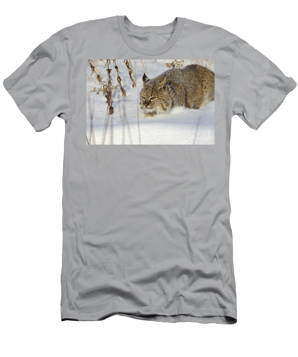 Lynx Rufus Men's T-Shirt (Athletic Fit) featuring the photograph Bobcat by John Shaw