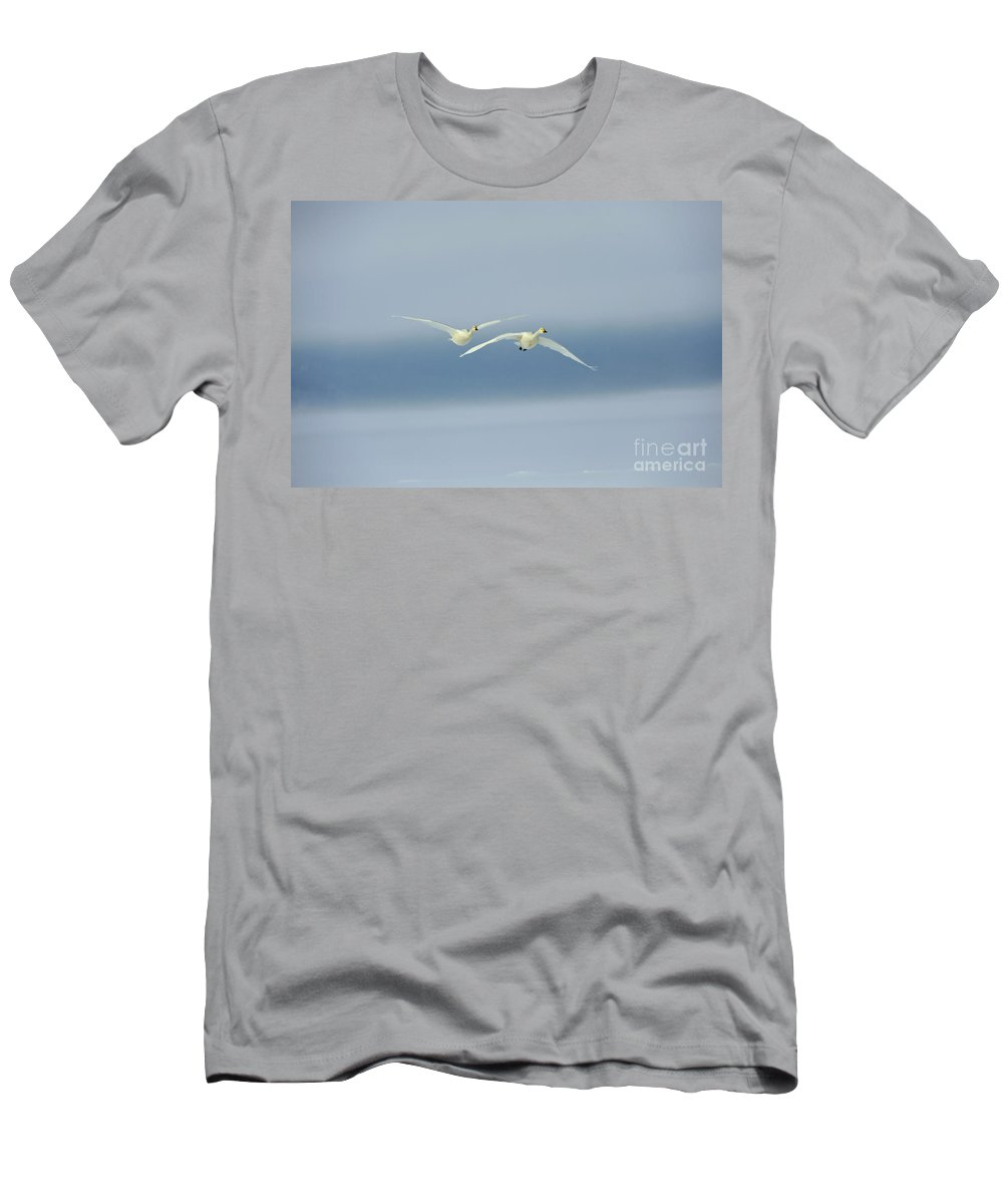Cygnus Cygnus Men's T-Shirt (Athletic Fit) featuring the photograph Whooper Swans by John Shaw