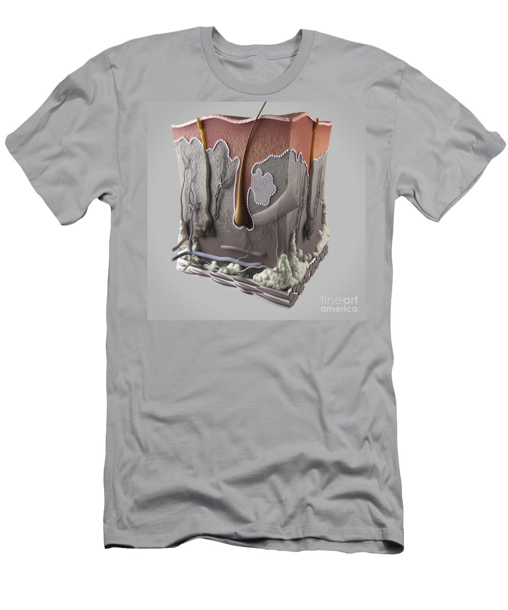 3d Visualisation Men's T-Shirt (Athletic Fit) featuring the photograph Anatomy Of Human Skin by Science Picture Co