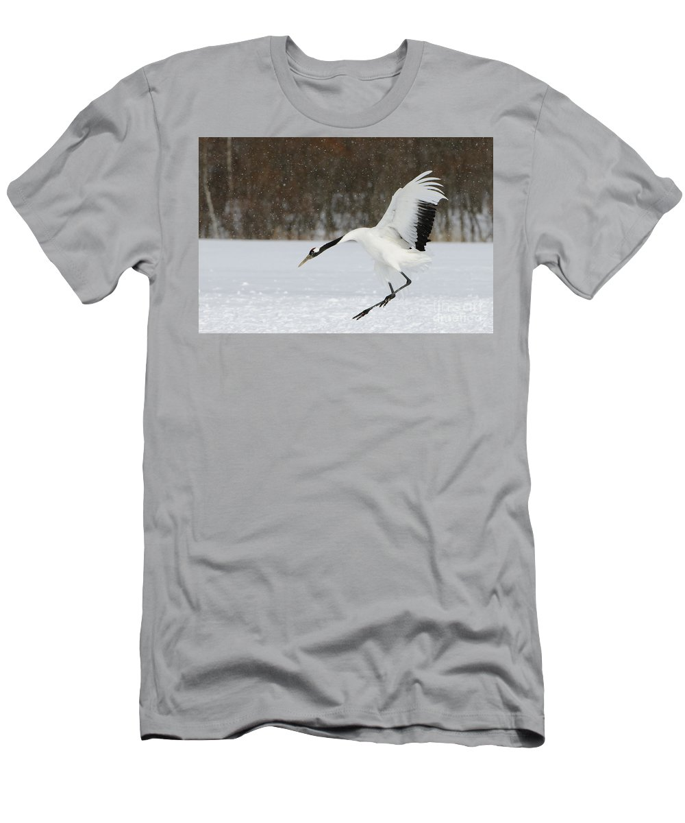 Asia Men's T-Shirt (Athletic Fit) featuring the photograph Red-crowned Cranes by John Shaw