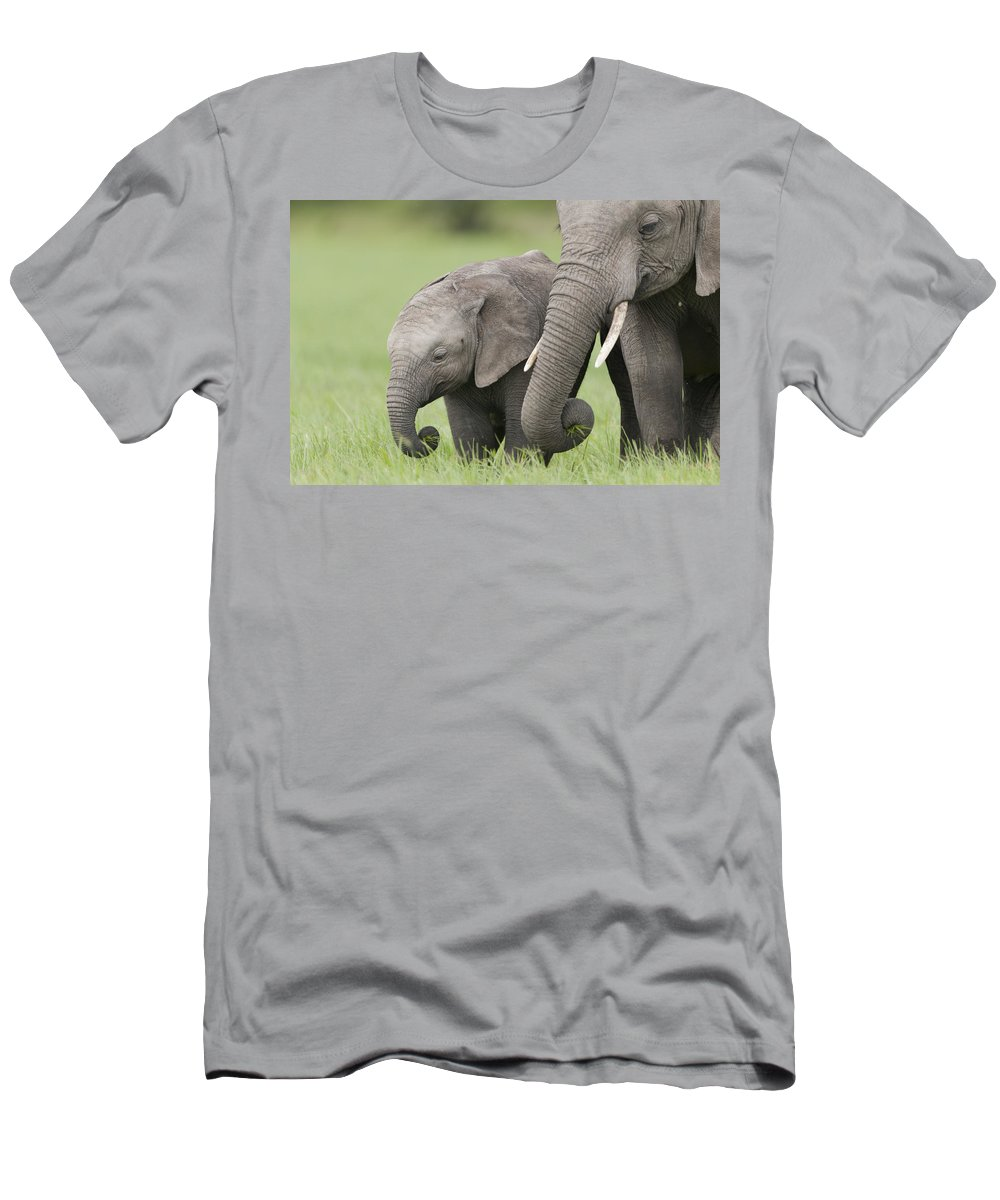 Feb0514 Men's T-Shirt (Athletic Fit) featuring the photograph African Elephant Juvenile And Calf Kenya by Tui De Roy