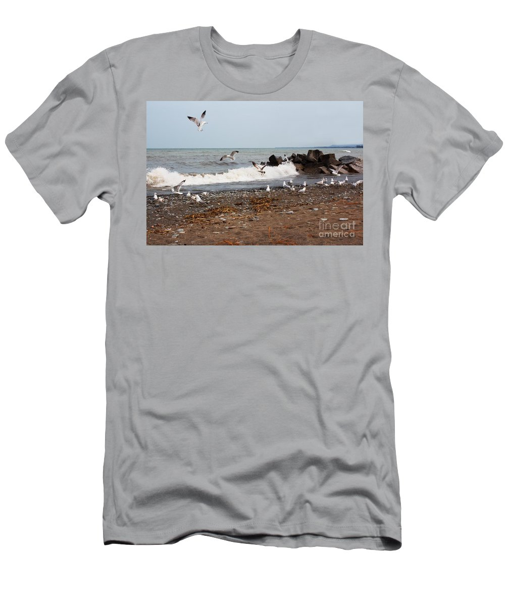 Gulls Men's T-Shirt (Athletic Fit) featuring the photograph After The Spring Thaw by Barbara McMahon