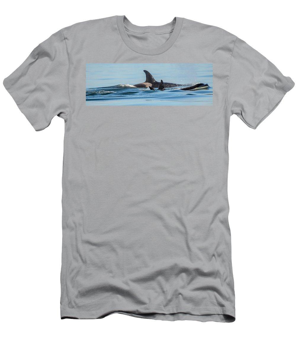 Orca Men's T-Shirt (Athletic Fit) featuring the photograph All In The Family by Roxy Hurtubise