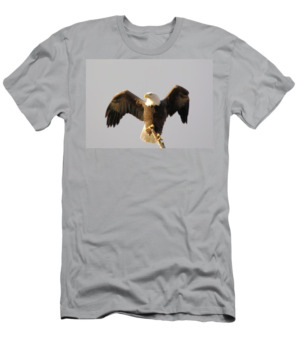 Birds Men's T-Shirt (Athletic Fit) featuring the photograph An Eagle Posing by Jeff Swan