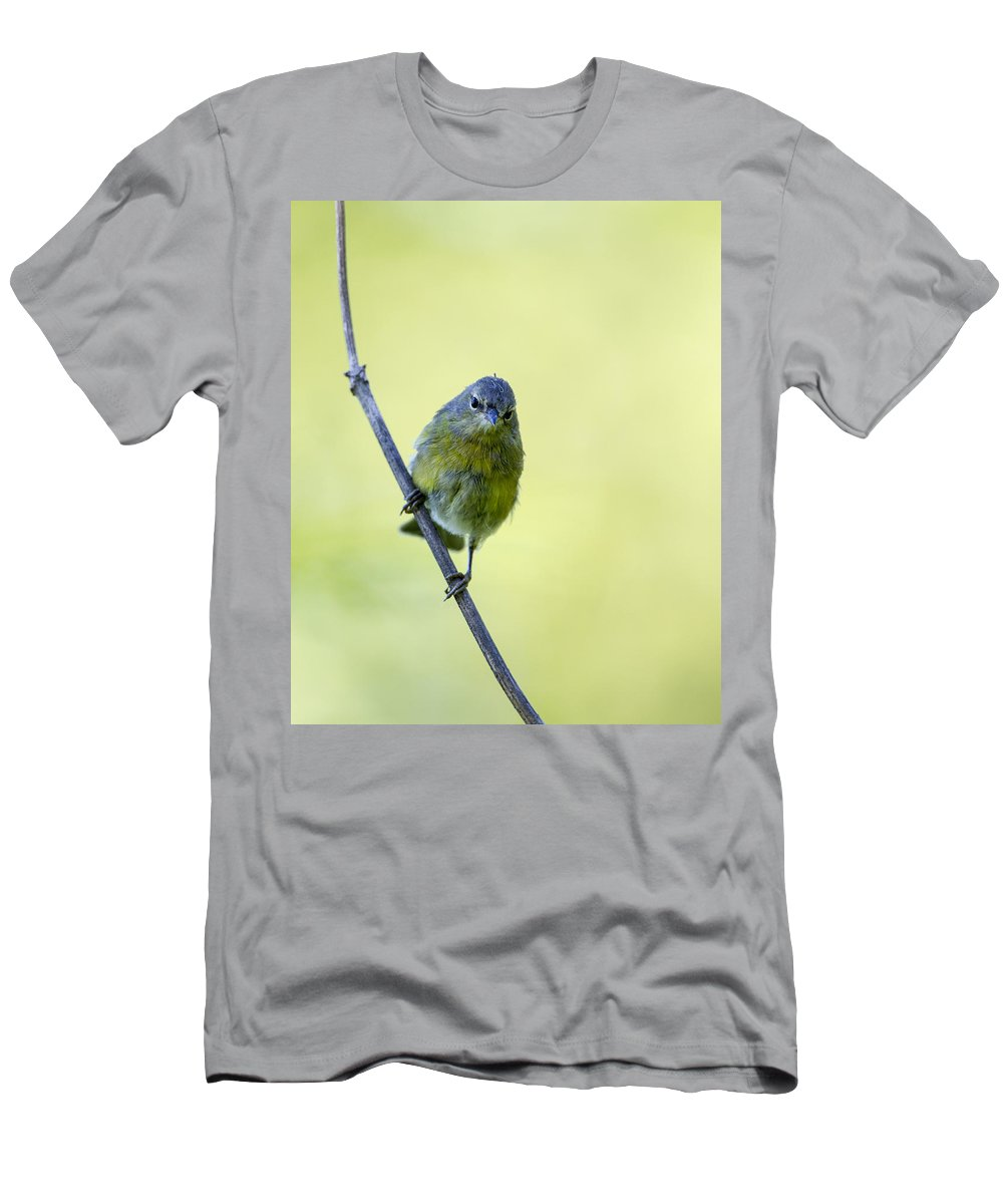 Doug Lloyd Men's T-Shirt (Athletic Fit) featuring the photograph Angry Bird by Doug Lloyd