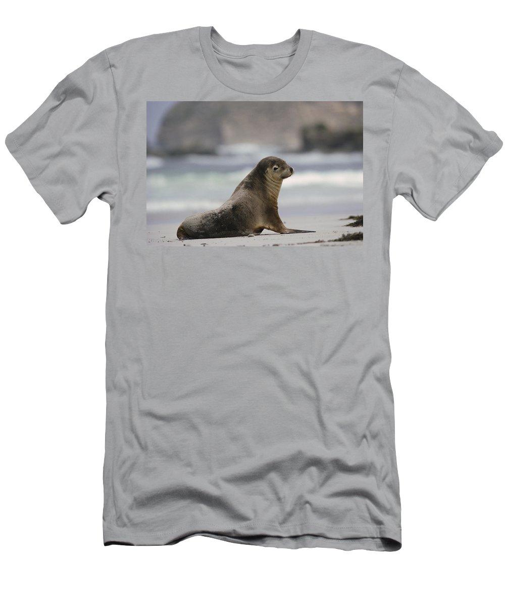 Feb0514 Men's T-Shirt (Athletic Fit) featuring the photograph Australian Sea Lion On Beach Kangaroo by Gerry Ellis