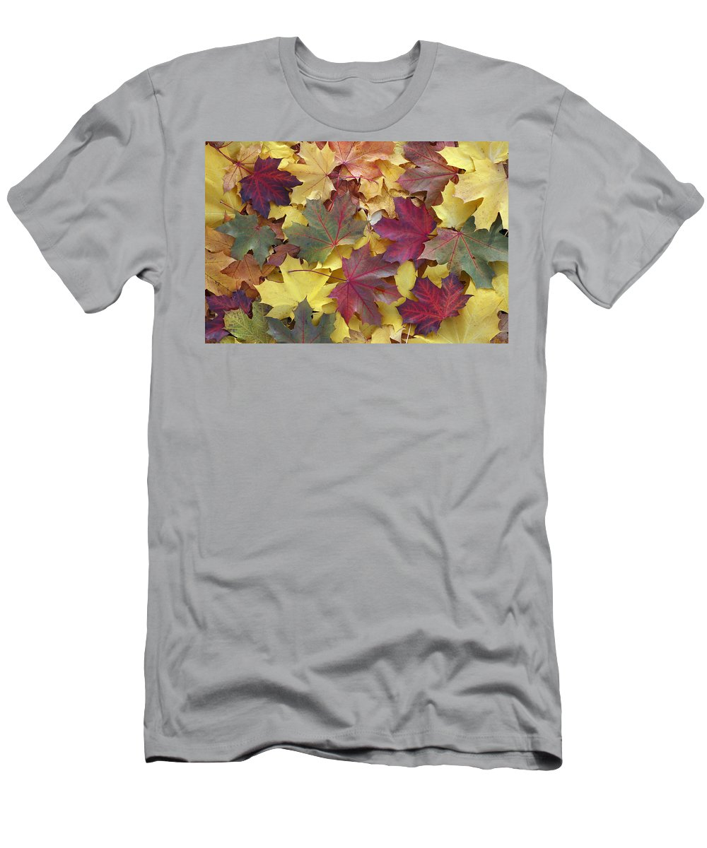 Feb0514 Men's T-Shirt (Athletic Fit) featuring the photograph Autumn Sycamore Leaves Germany by Duncan Usher