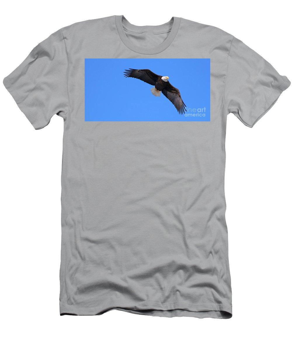 Bald Eagle Men's T-Shirt (Athletic Fit) featuring the photograph Bald Eagle 3772 by Jack Schultz