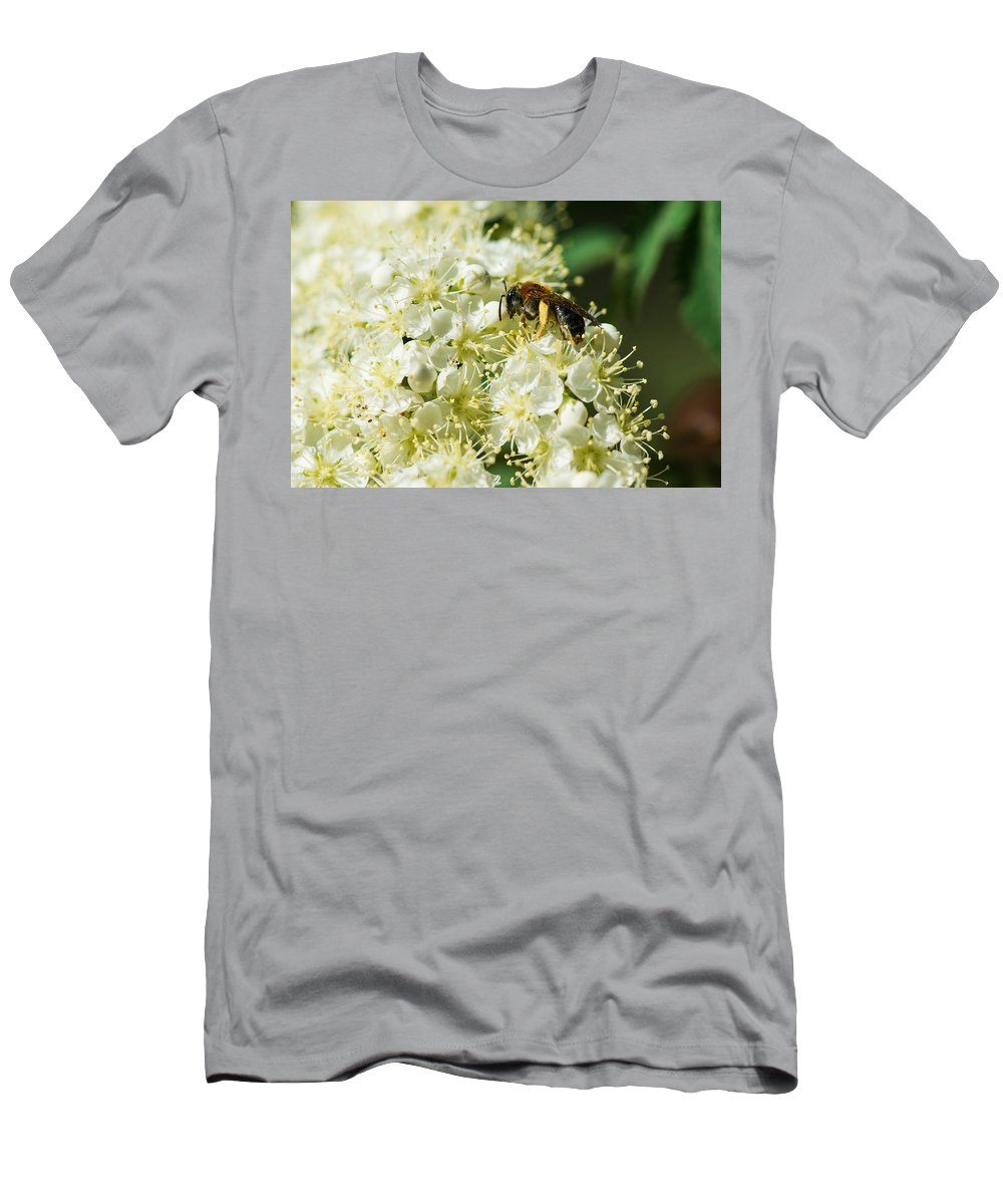 Animal Men's T-Shirt (Athletic Fit) featuring the photograph Banquet by Alexander Senin